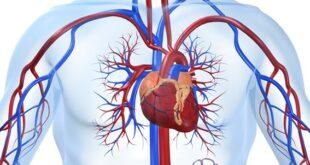 الأمراض القلبية الوعائية في صدارة أسباب الوفيات في جميع أنحاء العالم