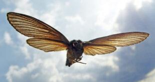 Родственные связи: учёные разгадали загадку происхождения крыльев у насекомых