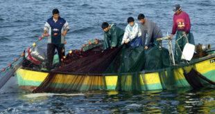 علماء يحذرون: التنوع البيولوجي في سواحل شرق المتوسط والساحل الفلسطيني ينهار