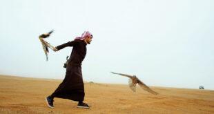 «حلفاء الطبيعة».. فيلم وثائقي عن الصقارين بالسعودية